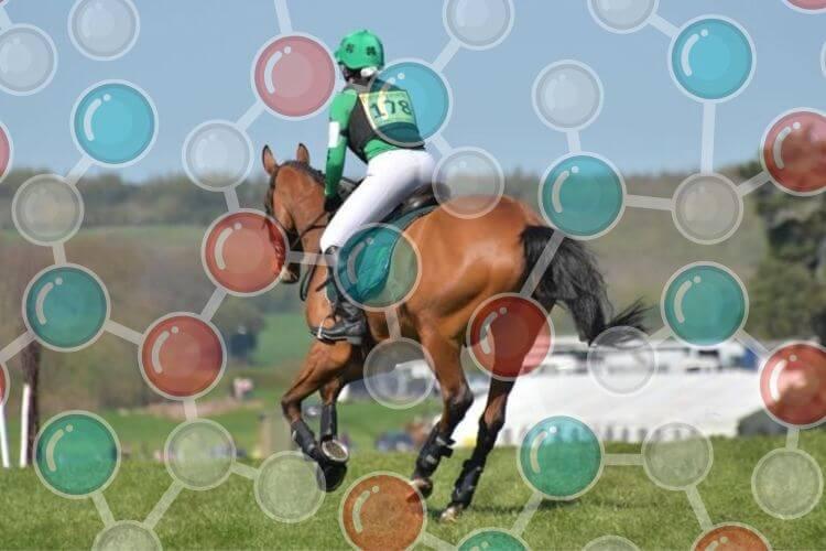 How many amino acids do horses need