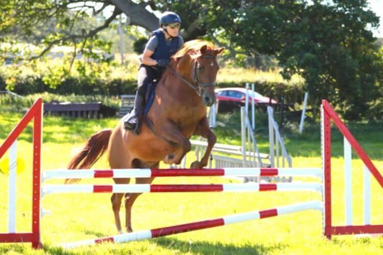 Lysine for Horses - Forageplus protein amino acid