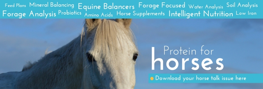 Protein for Horses Forageplus Horse Talk Issue