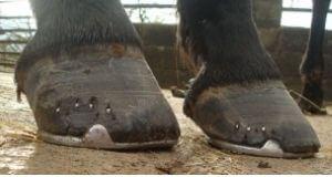 High Horse High Heel Low Heel Syndrome