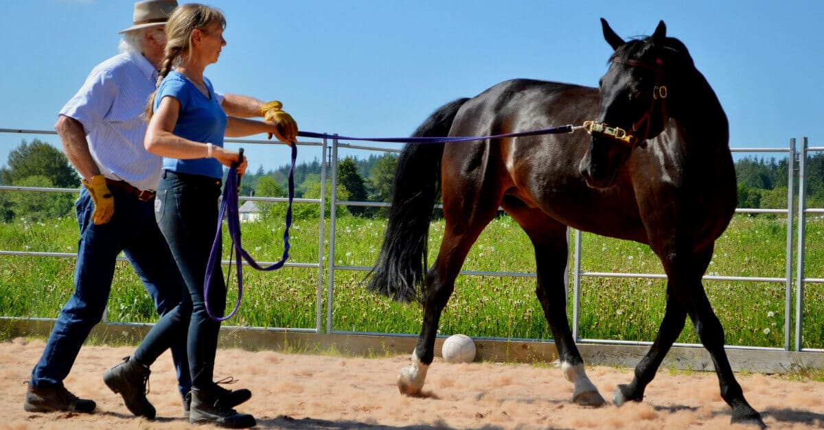 Functional Horse Training Schoeniech ARR UK 2019