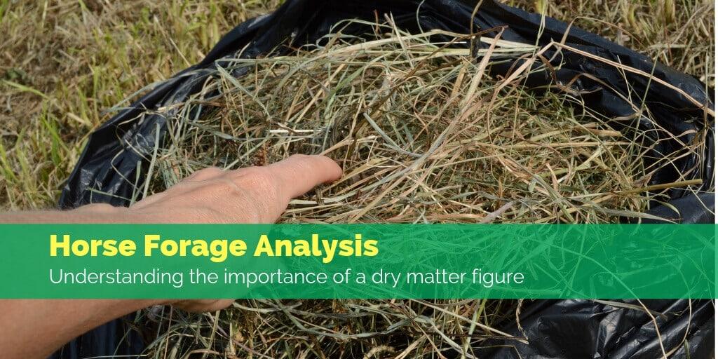 Horse forage analysis understanding dry matter