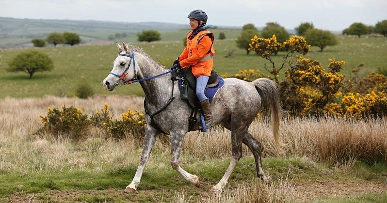 Forageplus Gold Award Horse at Golden Horseshoe Ride 2015