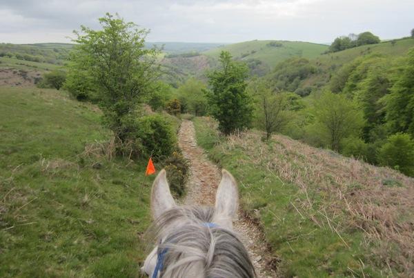 Forageplus Golden Horseshoe Endurance Ride 2015