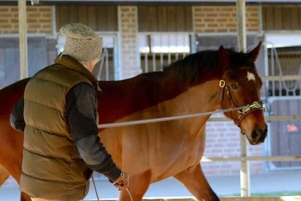 Horse Straightness Training Schoeneich ARR Centre