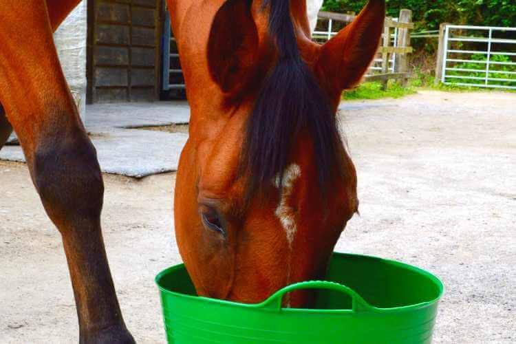 Balanced Horse Diet Forageplus