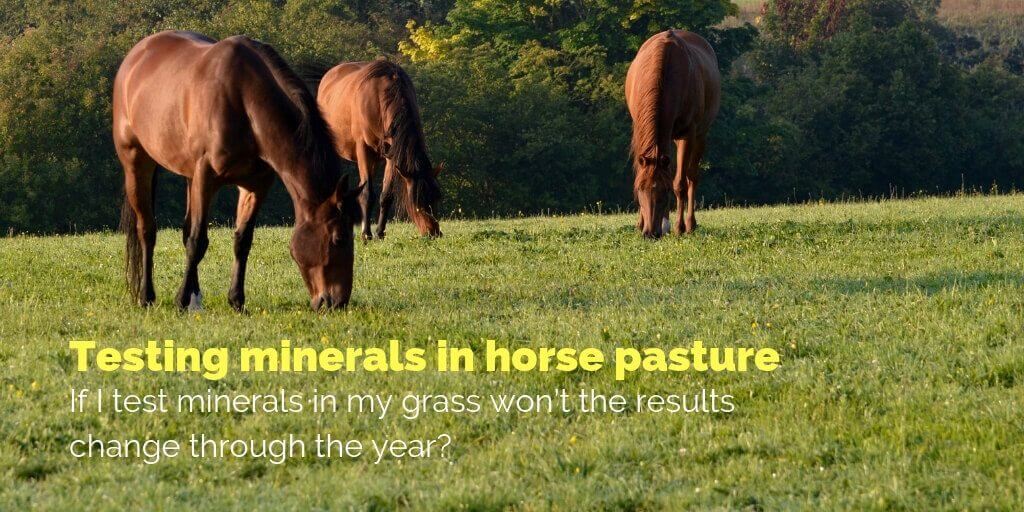 test minerals in my horse pasture