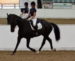 Jo-Ellis-Forageplus-Employee-riding-with-Carreg-Dressage-1024×831-1-358×291