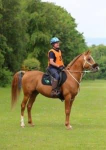 Terry-Madden-Bonanza-TAJ-Perforamnce-Horses-e1479916463739-1-316×448