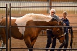 horse-for-sale-horse-straightness-training-328×218