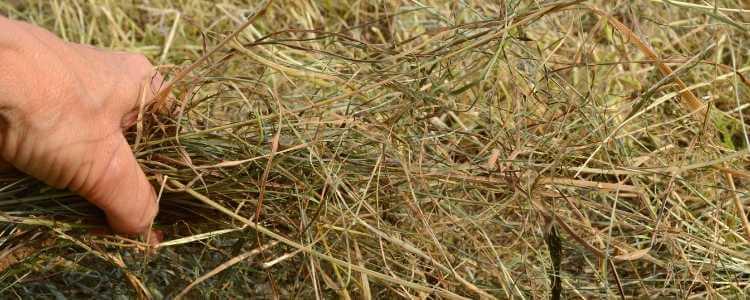 Forageplus horse haylage