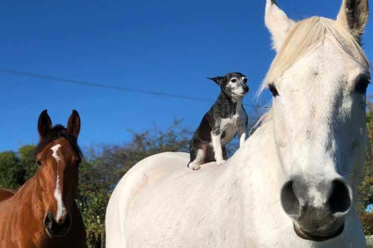 Omega 3 for Horses Forageplus