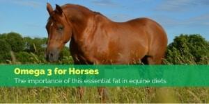 Omega-3-for-horses-768×384-300×150