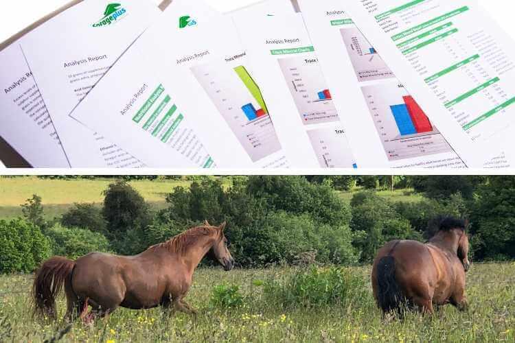 Understanding Horse Forage Analysis Reports Forageplus
