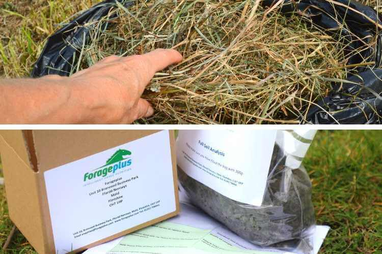 Soil test or forage test for horse pasture Forageplus