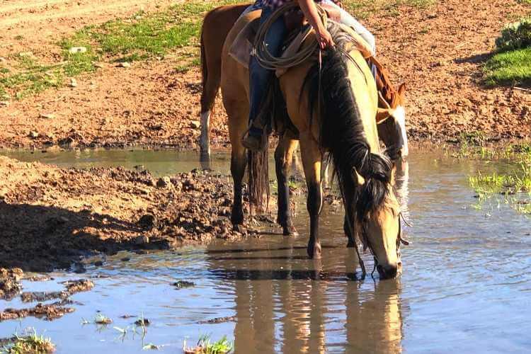 Horse water analysis Forageplus