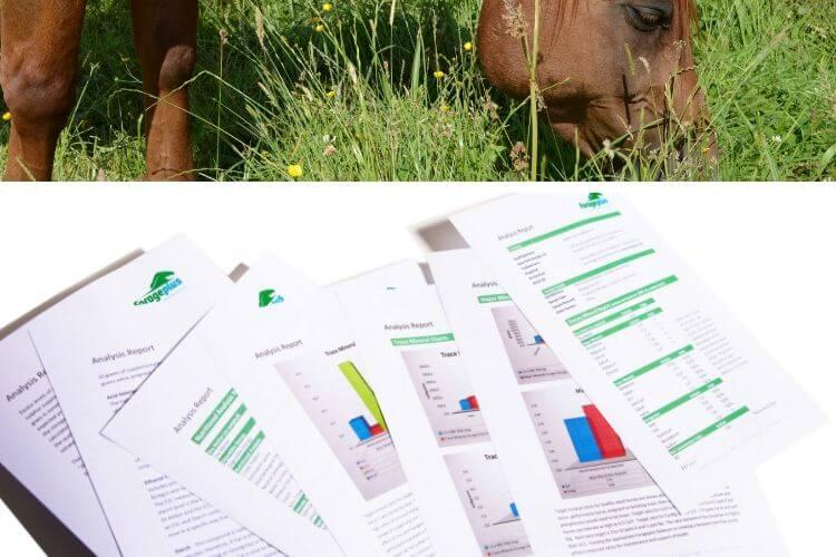 Mineral analysis testing horse grass hay | Forageplus