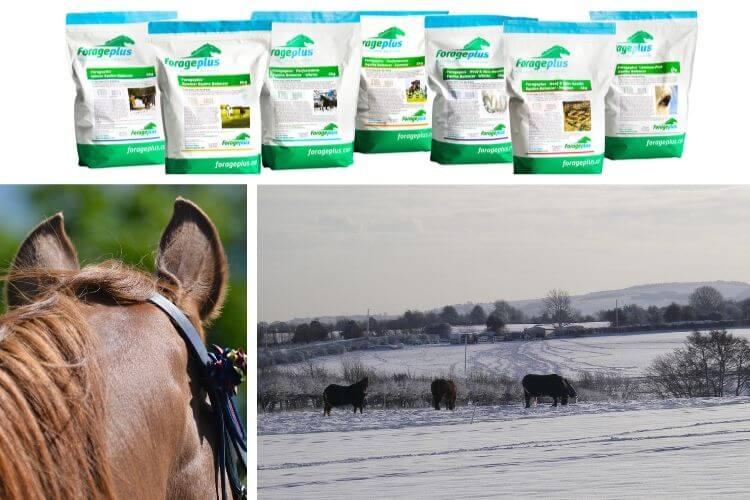 Seasonal horse feed balancer | Forageplus
