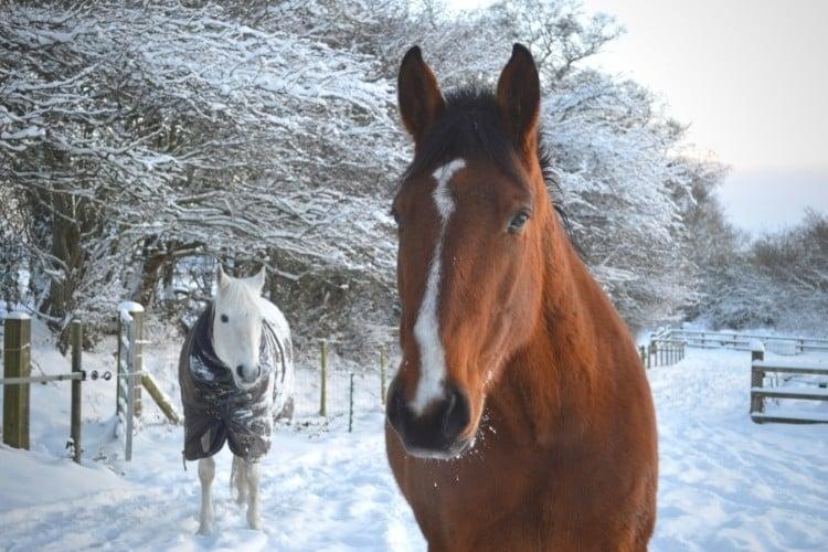 Ten tips for winter horse feeding